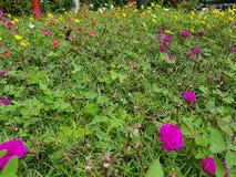 Bloemen op struiken stock afbeelding