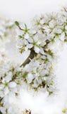Bloemen op takje Royalty-vrije Stock Afbeelding