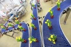 Bloemen op transportband, productielijn Stock Fotografie