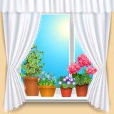 Bloemen op venster Stock Foto