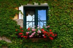 Bloemen op vensterbank Royalty-vrije Stock Afbeeldingen