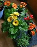 Bloemen op vloer Royalty-vrije Stock Fotografie