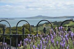 Bloemen op Waiheke Royalty-vrije Stock Afbeelding