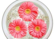 Bloemen op water stock afbeeldingen