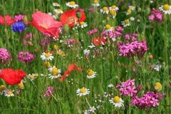 Bloemen op weide Royalty-vrije Stock Afbeeldingen