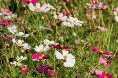 Bloemen op weide Stock Fotografie