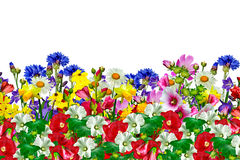 Bloemen op witte achtergrond worden geïsoleerd die Stock Foto's