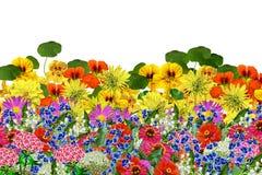Bloemen op witte achtergrond worden geïsoleerd die Royalty-vrije Stock Afbeeldingen