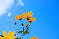 Bloemen over blauw Stock Fotografie