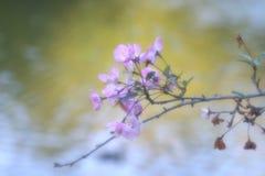 Bloemen over meer stock foto