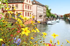 Bloemen over rivier Royalty-vrije Stock Foto's