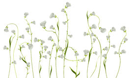 Bloemen over wit Stock Afbeeldingen