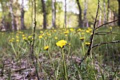 Bloemen, paardebloem, gras, aard, bomen royalty-vrije stock afbeeldingen