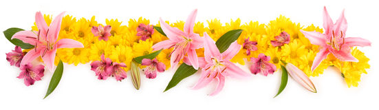 Bloemen Panorama Stock Afbeelding