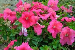 Bloemen in park en landbouwbedrijf Stock Foto