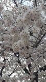 Bloemen in Park in Zuid-Korea Royalty-vrije Stock Afbeeldingen