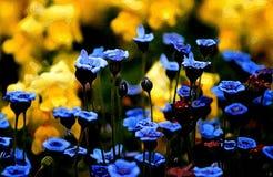 Bloemen of patroon stock afbeelding