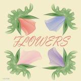 Bloemen, patroon, pastelkleur, schoonheid, tederheid Royalty-vrije Stock Foto