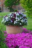 Bloemen in pot Het tuinieren Royalty-vrije Stock Afbeeldingen