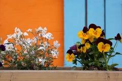 Bloemen in pot met kleurrijke achtergrond Royalty-vrije Stock Afbeelding