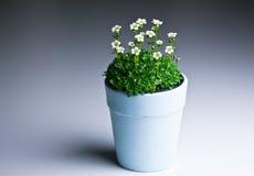 Bloemen in pot op een gradiënt blauwe achtergrond Stock Afbeeldingen