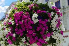 Bloemen in potten in de straten Ontwerp, Stock Foto's