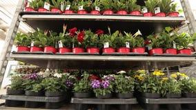 Bloemen in potten op een rij Mooie bloementribune op een rij in voorraad stock footage