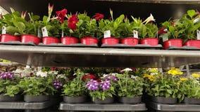 Bloemen in potten op een rij Mooie bloementribune op een rij in voorraad stock video
