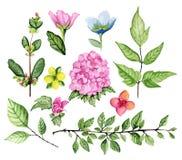 Bloemen reeks Stock Afbeeldingen