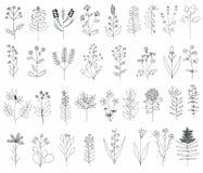 Bloemen reeks Stock Afbeelding