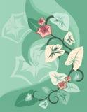 Bloemen Reeks Als achtergrond Stock Foto