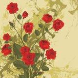Bloemen reeks als achtergrond Stock Foto's