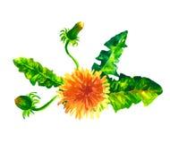 Bloemen reeks Inzameling met bladeren De lente of de zomerontwerp voor uitnodiging Royalty-vrije Stock Afbeelding