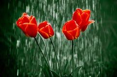 Bloemen in regen stock foto's