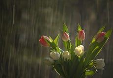 Bloemen in regen Stock Foto