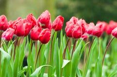 Bloemen in regenachtige dag Royalty-vrije Stock Foto