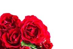 Bloemen rode rozen op een wit close-up als achtergrond Stock Fotografie