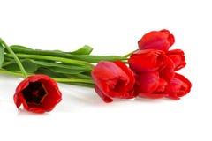 Bloemen rode tulpen Stock Afbeeldingen