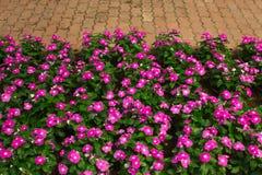 Bloemen roze mooie backgrund als achtergrond Stock Afbeeldingen