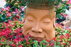 Bloemen roze mooie backgrund en dool als achtergrond Stock Fotografie