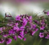 Bloemen roze-wit-groene mooie achtergrond Bos roze bloemen op een vage achtergrond Zachte nadruk Royalty-vrije Stock Foto's