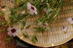 Bloemen samenstelling Stock Foto's