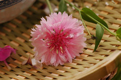 Bloemen samenstelling Royalty-vrije Stock Afbeeldingen