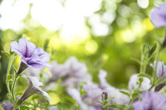 Bloemen, selectieve nadruk op bloem abstracte achtergrond Royalty-vrije Stock Fotografie