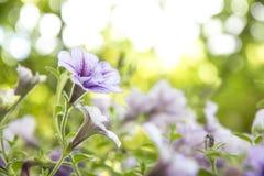 Bloemen, selectieve nadruk op bloem abstracte achtergrond Stock Foto
