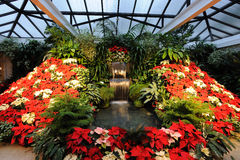 Bloemen in serre Stock Afbeeldingen