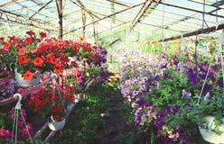 Bloemen in serre royalty-vrije stock afbeelding