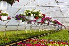 Bloemen in Serre Royalty-vrije Stock Fotografie