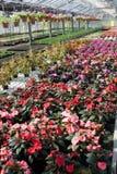 Bloemen in serre stock fotografie