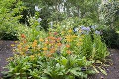 Bloemen in Sheffield Botanical Gardens royalty-vrije stock afbeeldingen